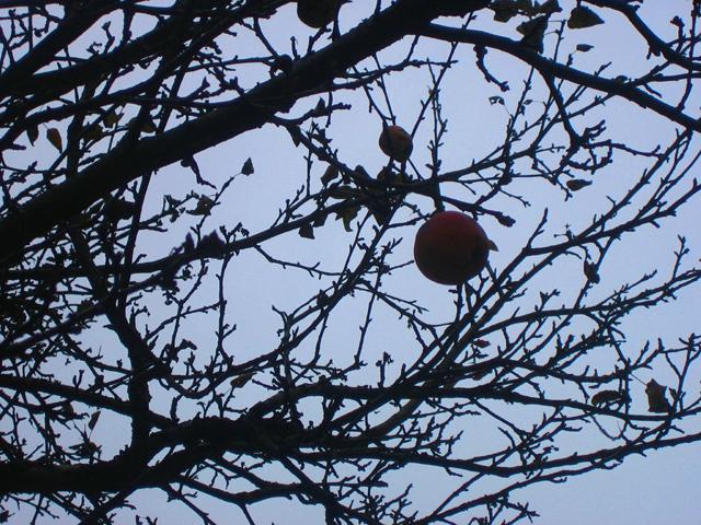 deadtreesbarefruit.jpg