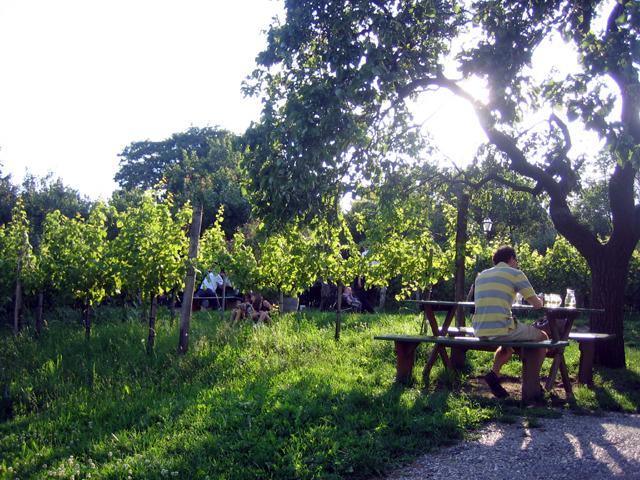 vineyard4.jpg
