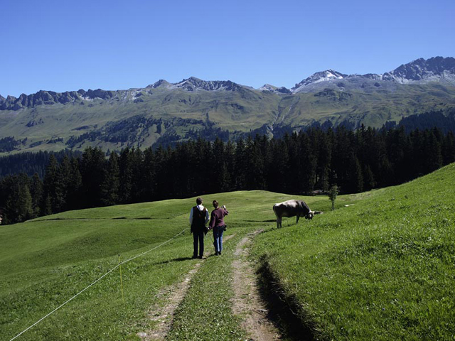 suisse3.jpg