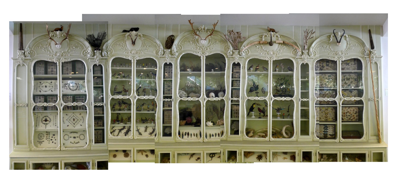 Le cabinet curiosit s de bonnier de la mosson - Le cabinet de curiosites ...